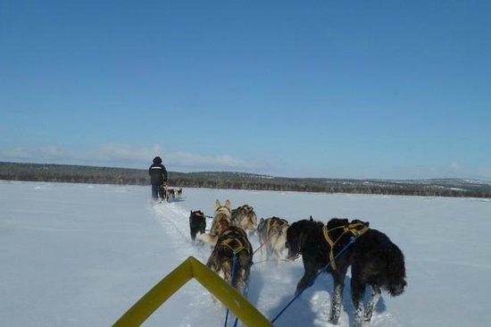 Birk Husky: all that snow