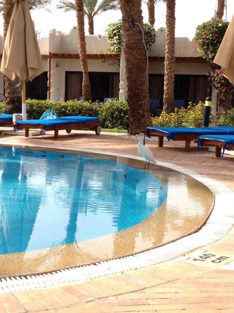 Fayrouz Resort Sharm El Sheikh : pool
