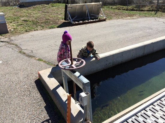 Durango Fish Hatchery and Wildlife Museum: The fish hatchery is a fantastic place for children.