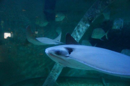 Atlantic City Aquarium Historic Gardner's Basin: rays