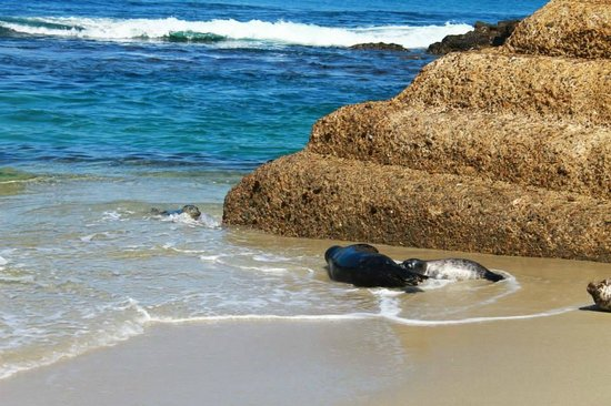 Children's Pool: Seals playing in water and sand and rock