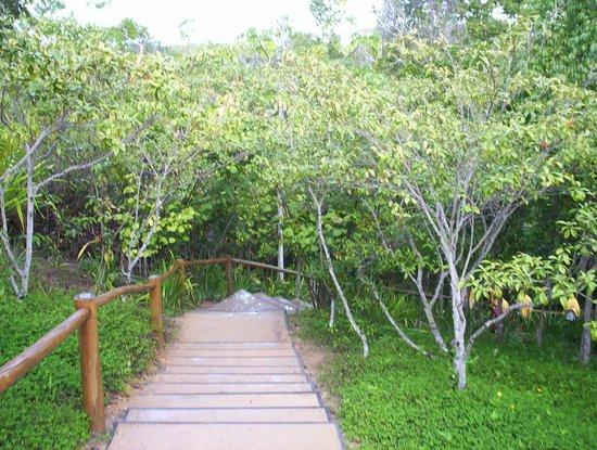 Club Med Trancoso: Escada para a praia
