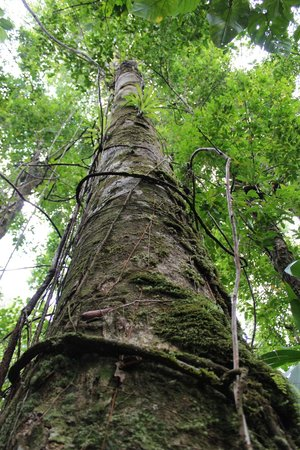 Reyno Day Tours: Rainforest