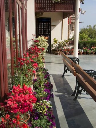 View of the Terrace Flowers
