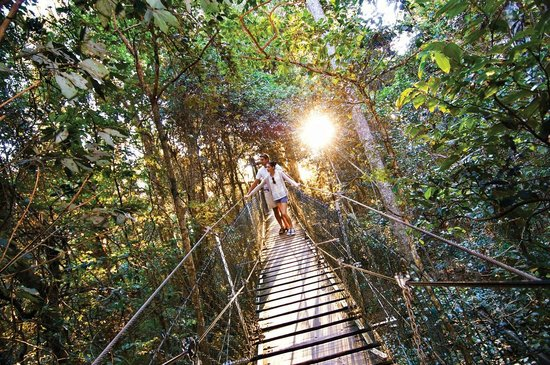 O'Reilly's Rainforest Retreat, Mountain Villas and Lost World Spa: O'Reilly's Tree Top Walk