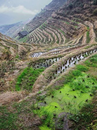 Longji Holiday Hotel: View from above the village
