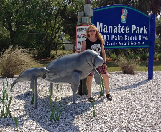 Manatee Park : NIce manatee sculptures in the park