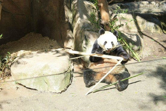 San Diego Zoo : Zoo didn't impress me much, but I did like the pandas!