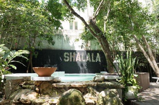 Ecolodge Shalala : The pool..