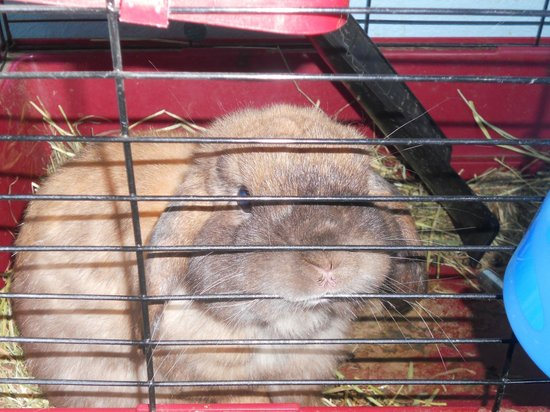 Alaska Backpackers Inn : Norman - the hostel bunny what loves being pet