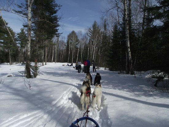 "Wintergreen Dogsledding Lodge: On the trail To "" Happy Destiny"""