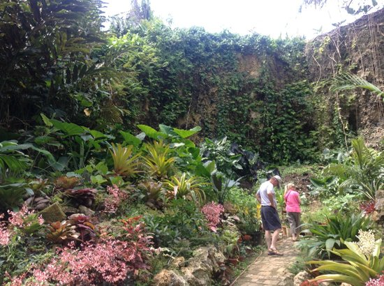 Hunte's Gardens : Mr Hunte is working on this end of the garden