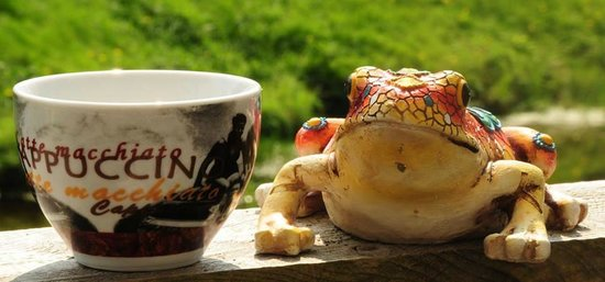 Frog Pond Cafe: cappuccinos and frogs
