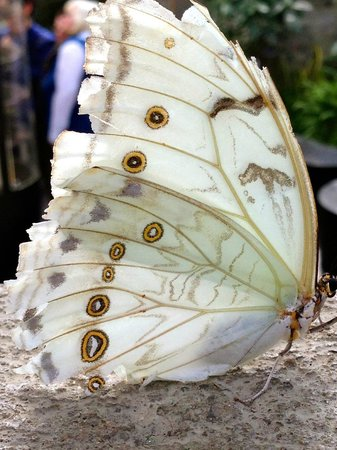 Montreal Botanical Gardens: white butterfly
