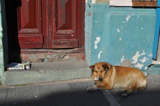 La Boca: random dog