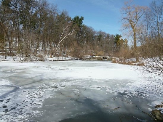 High Park : frozen pond