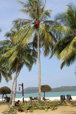 Meritus Pelangi Beach Resort & Spa, Langkawi: RESORT BEACH AREA