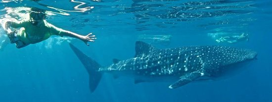 3 Islands Whale Shark Dive: Magic at Ningaloo