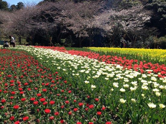 Hamamatsu Flower Park: 世界一美しい「桜とチューリップの庭園」