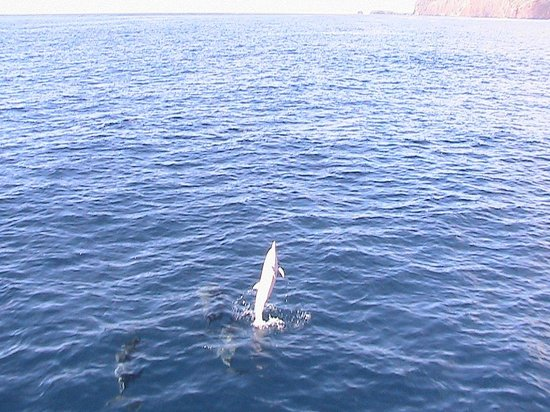 Pacific Whale Foundation : Clever Spinner dolphins