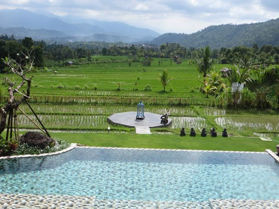 Sanak Retreat Bali: The pool and the rice fields below