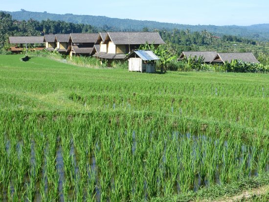Sanak Retreat Bali: View of Sanak from across the rice fields