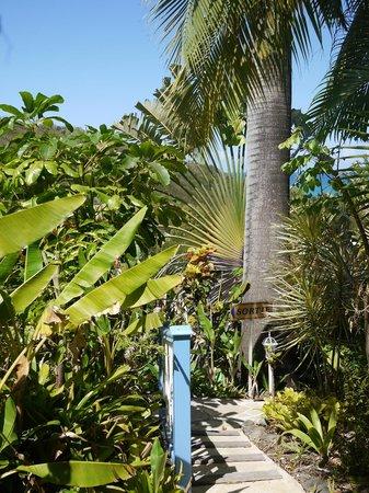 Caraibes Bonheur : Le jardin tropical