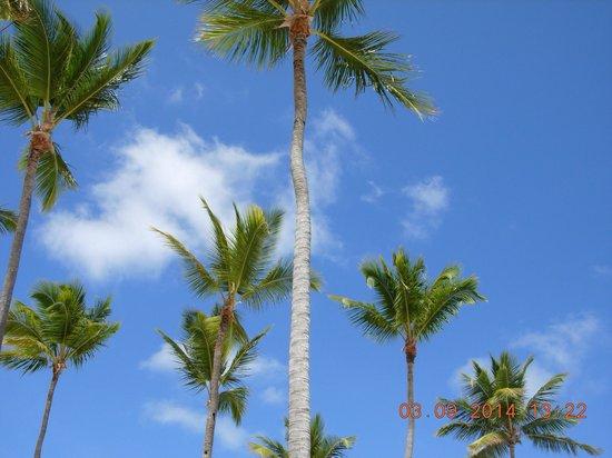 Bavaro Beach: Blue skies and coconut trees!
