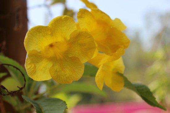 Nanni beach Residence: garden