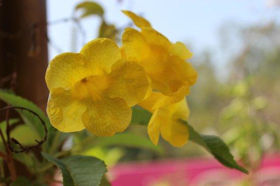 Nanni beach Residence: rooftop garden
