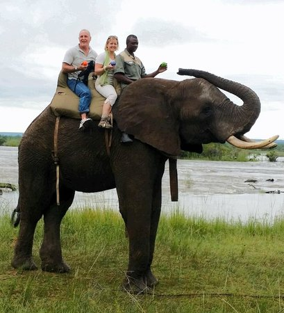 Thorntree River Lodge: Elephant morning rides to the river