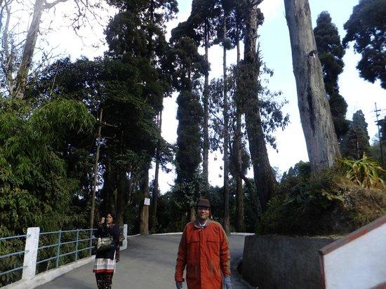 Japanese Peace Pagoda: Peace  pagoda premises