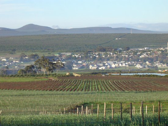 Sir Robert Stanford Wines: The view from the vineyard