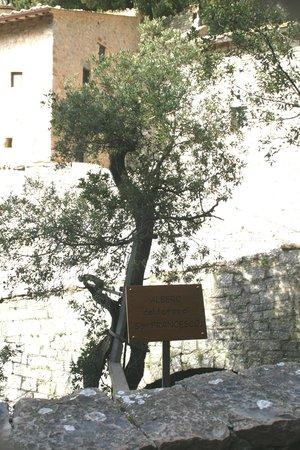 Eremo delle Carceri: l'albero del tempo di Francesco