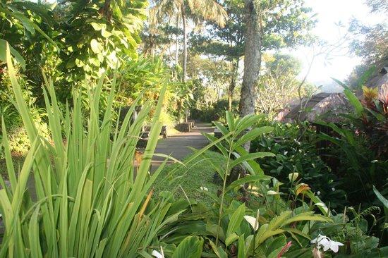 Maya Ubud Resort & Spa: la nature est magique