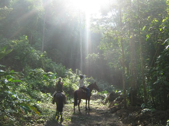 Discovery Horseback Tours