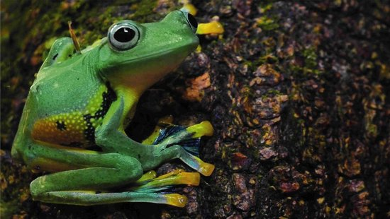 Science Museum of Western Virginia & Hopkins Planetarium: FROGS! features a dozen cool amphibians from around the world.