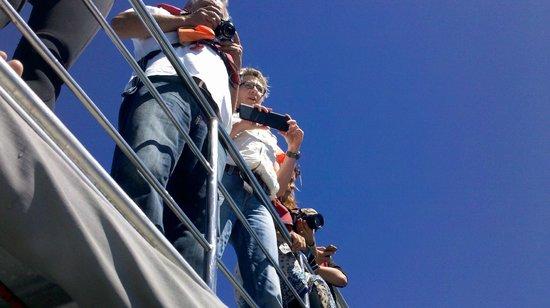 "Marine Dynamics: ""The Viewdeck"" up top"