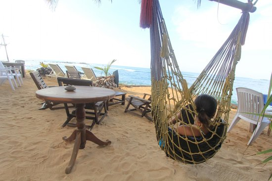 Beach Castle Bed and Breakfast: Relaxing in the hammock under the palm tree