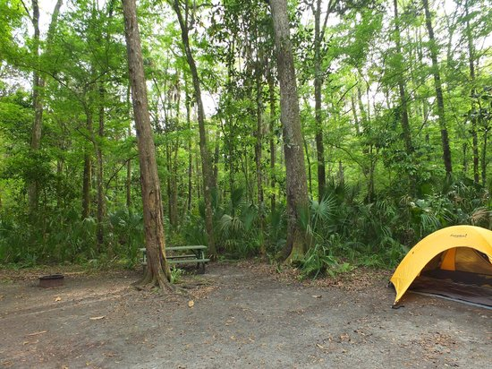 Chassahowitzka River C&ground Tent c&ing area (site 82) & Tent camping area (site 82) - Picture of Chassahowitzka River ...