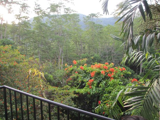 Hanthana Holiday Rooms: View from the balcony