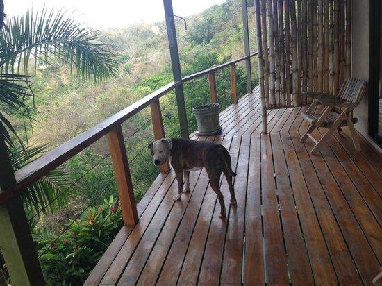 Surf Vista Villas: Dexter on our balcony