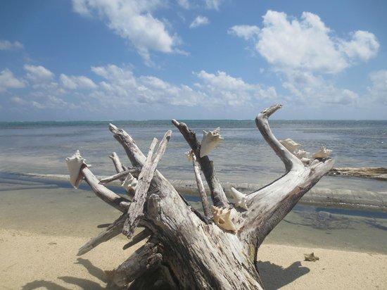 Sin Duda Villas : seashells by the seashore