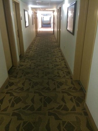 Quality Inn & Suites at Talavi: More gross carpet