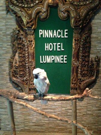 Pinnacle Lumpinee Park Hotel: オウムが歓迎と見送り?