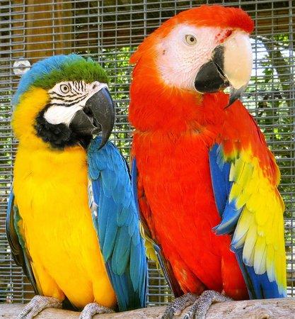 Bird Gardens of Naples: Bird Buddies