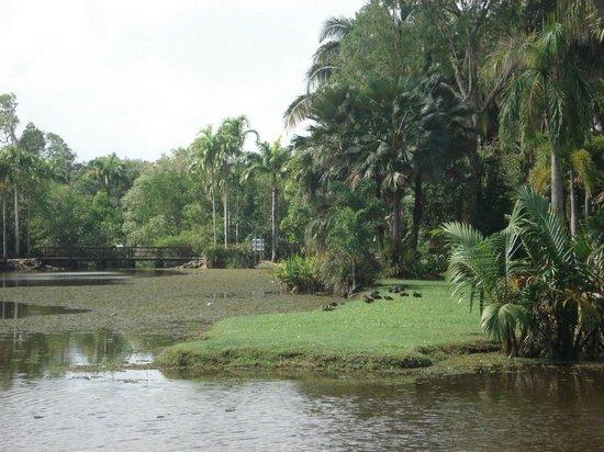 Cairns Botanical Gardens: Vistas das trilhas dentro do jardim