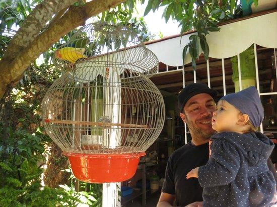 Pedrito Hostal: les perroquets