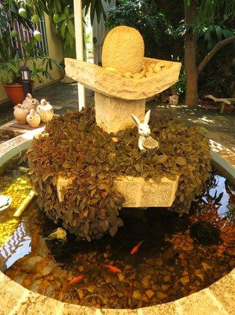 Pedrito Hostal: les poissons rouges