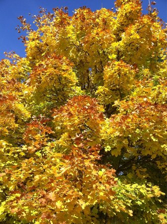 Avery, ID : October seemed to be the perfect time of the year to see the changing colors !!